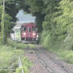 木のトンネルを通る長良川鉄道