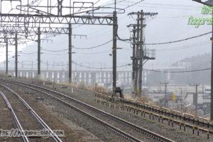 近江塩津駅から望む湖西線高架